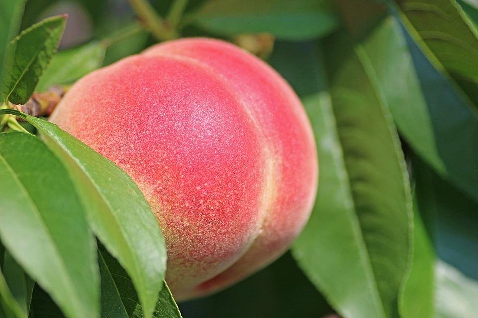 You are currently viewing I migliori alberi da frutta ornamentali