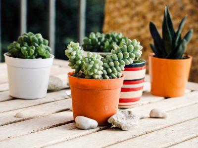 Come scegliere le piante da terrazzo