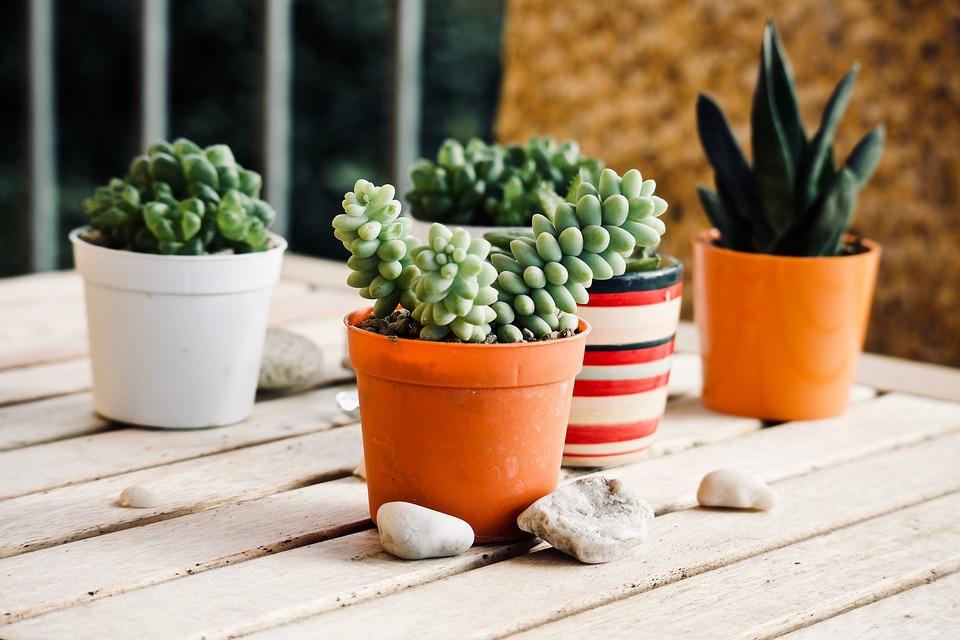 Read more about the article Come scegliere le piante da terrazzo