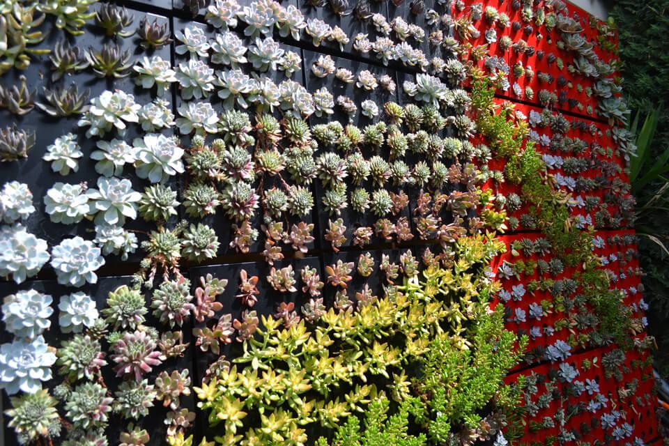 You are currently viewing Idee su come realizzare un giardino verticale