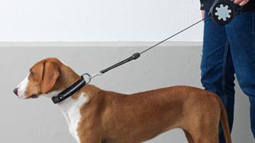 Ikea guinzaglio per cani